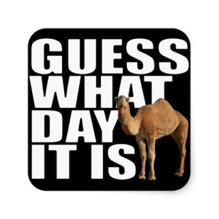 guess_what_day_it_is_hump_day_camel_stickers-r1c22b6bc19c04cb987c5be3ad4b4874f_v9wf3_8byvr_512